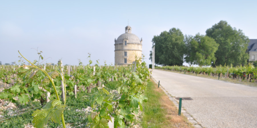 Bordeaux wine tours, Burgundy wine tours, Champagne wine tours